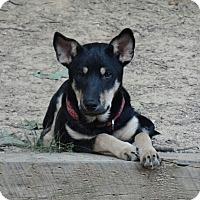 Adopt A Pet :: Serena - Ashburn, VA