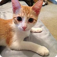 Adopt A Pet :: Oscar - Keller, TX
