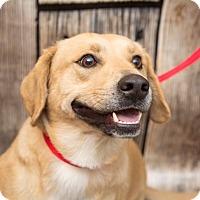 Adopt A Pet :: Barney - Waterbury, CT