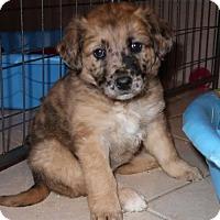 Adopt A Pet :: Darci - Burbank, OH