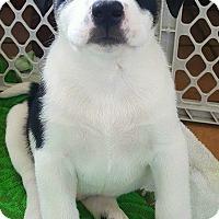 Adopt A Pet :: Poe - Los Banos, CA