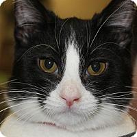 Adopt A Pet :: BIANCA - Clayton, NJ