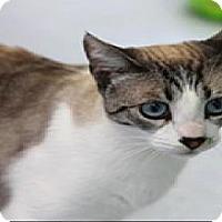 Adopt A Pet :: Nia - El Cajon, CA