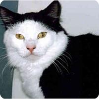 Adopt A Pet :: Orki - Medway, MA