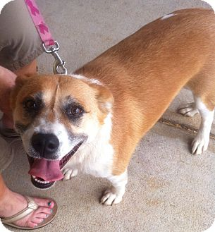 Collie Mix Dog for adoption in Albemarle, North Carolina - Max