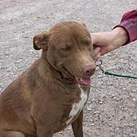 Border Collie/Hound (Unknown Type) Mix Dog for adoption in Golden Valley, Arizona - Ginger
