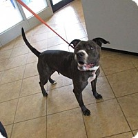 Adopt A Pet :: SAMANTHA - Marion, OH