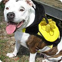 Adopt A Pet :: Carmella - Lakeland, FL