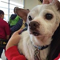 Adopt A Pet :: Brenda Ann - San Pedro, CA