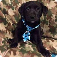 Adopt A Pet :: Chris - Sudbury, MA