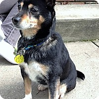 Adopt A Pet :: Bubbles - North Olmsted, OH