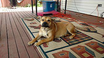 Shepherd (Unknown Type) Mix Dog for adoption in Sharon Center, Ohio - Cindy
