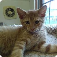 Adopt A Pet :: JUPITER - Owenboro, KY