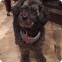 Adopt A Pet :: Oliver - N. Babylon, NY
