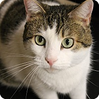 Adopt A Pet :: Missie - Medina, OH
