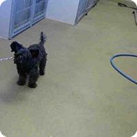Adopt A Pet :: A698430 - Sacramento, CA