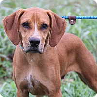 Adopt A Pet :: Gomer (Neutered) - Marietta, OH
