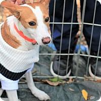 Adopt A Pet :: Genna - Morganville, NJ