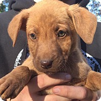 Adopt A Pet :: Sharon - Grafton, WI