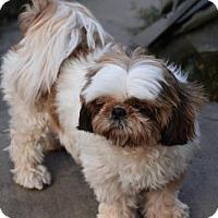 Adopt A Pet :: Gizzy - Tenafly, NJ