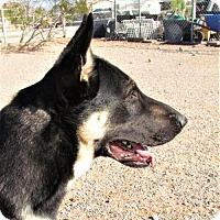 Adopt A Pet :: Rooster - San Tan Valley, AZ