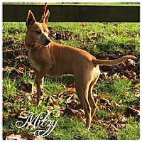 Adopt A Pet :: Mitzy - Hope, BC