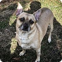 Adopt A Pet :: Gouda - Raritan, NJ