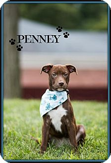 Terrier (Unknown Type, Medium)/Hound (Unknown Type) Mix Puppy for adoption in Elgin, Illinois - Penny