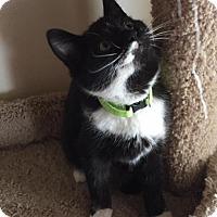Adopt A Pet :: Milkweed - Glendale, AZ