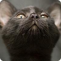Adopt A Pet :: BLAINE - Houston, TX