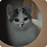 Adopt A Pet :: Ella - Modesto, CA