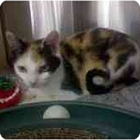 Adopt A Pet :: Juliet - Greenville, SC