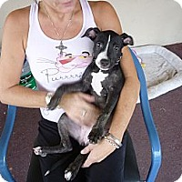 Adopt A Pet :: Fiona - Scottsdale, AZ