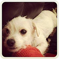 Adopt A Pet :: Monkey - Lake Forest, CA