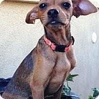 Adopt A Pet :: Tina - Gilbert, AZ