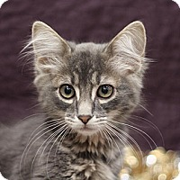 Adopt A Pet :: Harry - Sacramento, CA