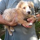 Adopt A Pet :: Stanley