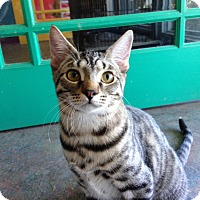 Adopt A Pet :: Bee - Topeka, KS