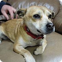 Adopt A Pet :: Karley - Meridian, ID