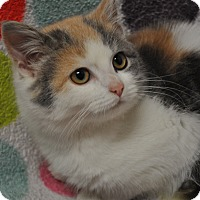 Adopt A Pet :: Beatrice - Rockaway, NJ