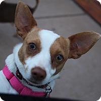 Adopt A Pet :: Reba - Tehachapi, CA