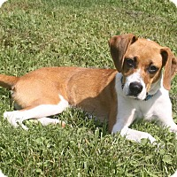 Adopt A Pet :: Eleanor - Knoxville, TN