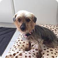 Adopt A Pet :: Penny - Sheboygan, WI