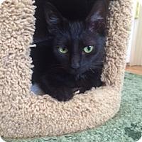 Adopt A Pet :: Torah - Long Beach, NY