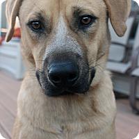 Adopt A Pet :: Dexter - Hatifeld, PA