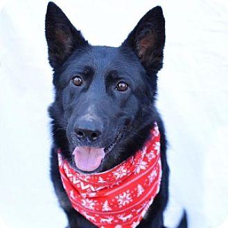 German Shepherd Dog Dog for adoption in San Diego, California - Luna