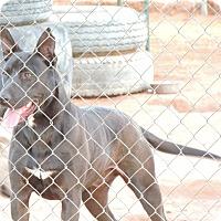 Adopt A Pet :: Duke - Denver City, TX