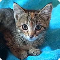 Adopt A Pet :: Frankie - Colorado Springs, CO