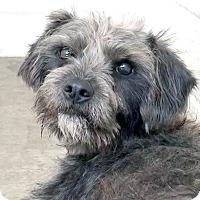 Adopt A Pet :: Ronan - Marina del Rey, CA
