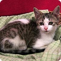 Adopt A Pet :: Merryweather - Redwood Falls, MN